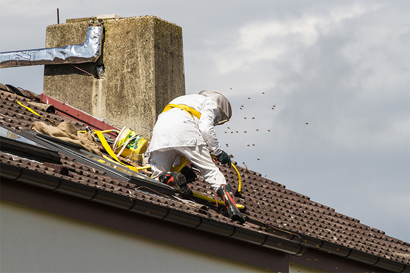 Bee Pest Control in Wiltshire United Kingdom